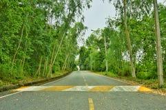 在路的绿色自然树 图库摄影