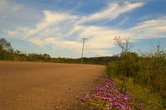 在路的紫色花 库存图片