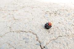 在路的黑莓 免版税图库摄影
