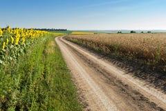 在路端的向日葵和麦子 免版税图库摄影