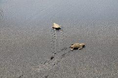 在路线的小乌龟十字形道路向海洋 免版税库存图片