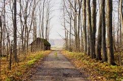 在路结构树附近的被放弃的秋天石渣& 库存图片