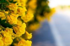 在路美好的迷离自然背景的黄色开花花 库存图片