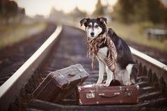 在路轨的狗带着手提箱 免版税库存照片