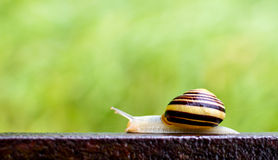 在路轨的蜗牛 图库摄影