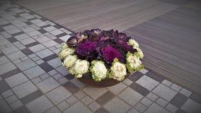 在路边缘的美丽的花在汉城市,南Ko 免版税库存图片