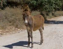 在路闪光的驴 库存照片