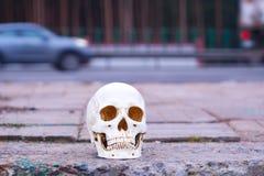 在路附近的头骨 在公路事故谋杀的注意危险 免版税库存照片