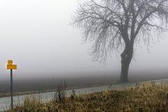 在路附近的旅游黄色标志和涌现从薄雾的树 免版税库存图片