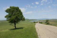在路附近的树在山 免版税库存照片