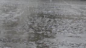 在路面广场的雨 影视素材