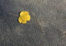 在路面的一片下落的黄色叶子 库存照片