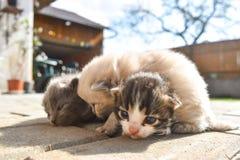 在路面的十只几天年纪小猫在后院 库存照片