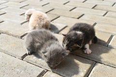 在路面的十只几天年纪小猫在后院 免版税图库摄影