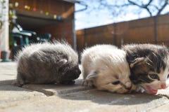 在路面的十只几天年纪小猫在后院 免版税库存照片