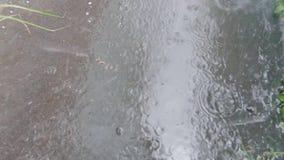在路面的大雨 影视素材