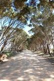 在路,袋鼠海岛的树 库存图片