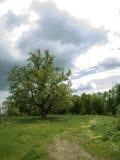 在路结构树附近 库存图片