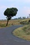 在路结构树附近 免版税图库摄影