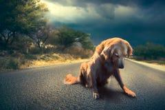 在路/high对比imag中间的哀伤,被放弃的狗 免版税库存图片