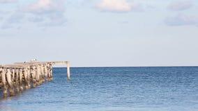 在跳船的海鸥在海景 股票录像