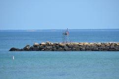 在跳船的鳕鱼角 免版税库存图片