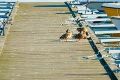 在跳船的鸟船尾 库存照片