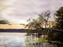 在跳跃在水的一棵下落的树的孩子身分 免版税库存照片