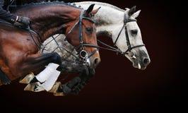 在跳跃的展示的两匹马,在棕色背景 免版税库存图片