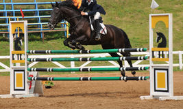 在跳跃的竞争的马 免版税库存图片