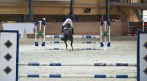 在跳过在跳跃赛的障碍的栗色公马的年轻女性车手 库存图片