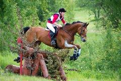 在跳过障碍日志篱芭的马的Eventer 库存照片