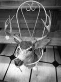 在车库售物的鹿头与价牌 免版税库存照片