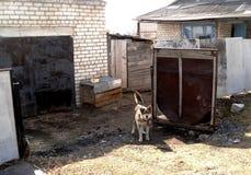 在车库附近的狗 免版税库存图片