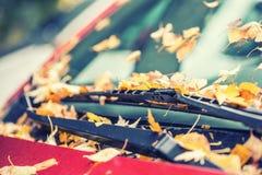 在车窗和身体下落的秋叶 库存照片
