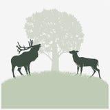 在车轮痕迹的鹿 免版税库存图片