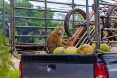 在轨道的猴子 免版税库存图片