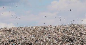 在转储的垃圾小山在非回收有鸟的第三世界县飞过 影视素材