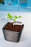 在转基因植物的条形码 免版税库存照片