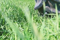 在轮子的灌溉系统 年轻麦子生长 库存照片