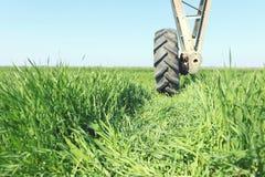 在轮子的灌溉系统 年轻麦子生长 库存图片