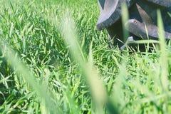 在轮子的灌溉系统 年轻麦子生长 图库摄影