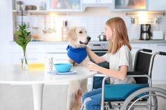 在轮椅的女孩附近为狗服务 免版税库存图片