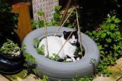 在轮胎睡觉的华美的猫 免版税库存图片