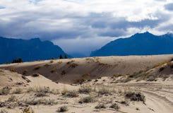 在轮藻属,西伯利亚的沙漠横向 库存图片
