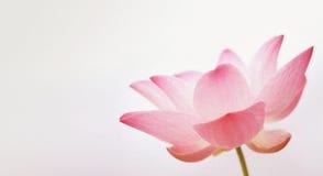在软性和葡萄酒颜色样式的莲花在桑树纸纹理 免版税库存照片