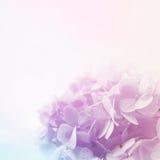 在软性和迷离样式的生动的颜色花在桑树裱糊纹理 免版税图库摄影