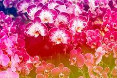 在软性的甜颜色兰花 免版税库存照片