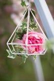 在软的样式的桃红色花背景的 免版税图库摄影