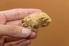 在软的潮湿巧克力曲奇饼里面特写镜头在wo举行了 免版税库存图片